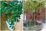 10 loại cây trồng trước nhà, tài lộc rầm rộ kéo tới, gia chủ làm ăn ngày càng vượng phát