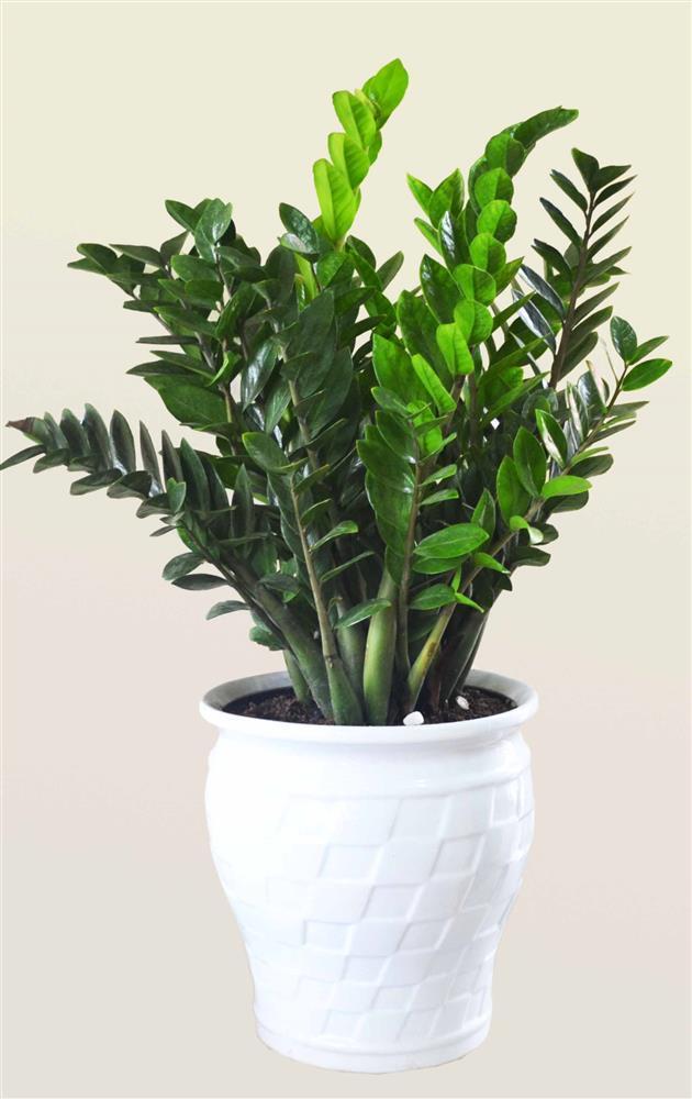 Những loại cây dễ trồng, dễ chăm, đặt trong nhà vô cùng may mắn-1