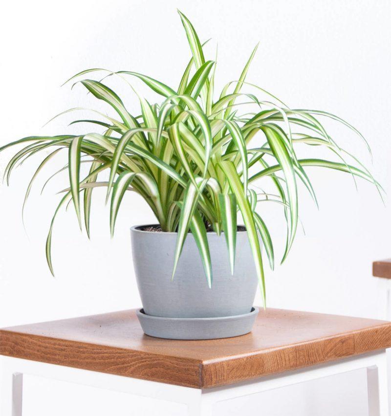 Những loại cây dễ trồng, dễ chăm, đặt trong nhà vô cùng may mắn-3