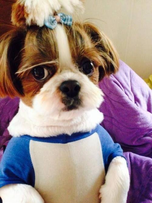 Người đầu tiên J-Hope khoe đề cử Grammy là... chó cưng-6