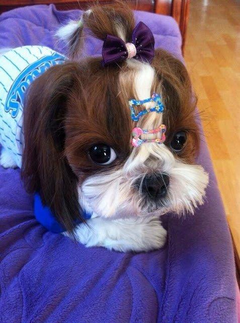 Người đầu tiên J-Hope khoe đề cử Grammy là... chó cưng-5