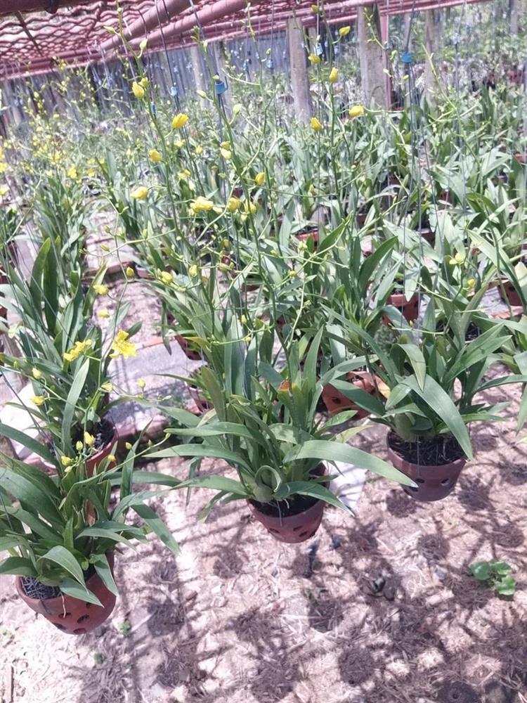Vườn lan 700m2 của mẹ bỉm sữa yêu hoa-3
