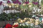 Vườn lan 700m2 của mẹ bỉm sữa yêu hoa