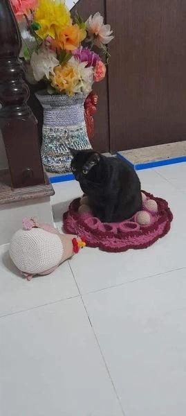 Con sen khổ sở vì hoàng thượng có sở thích ấp trứng, ổ gà trang trí cũng bị phá-2