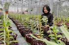 Vườn lan nghìn chậu của 'bóng hồng' 8X Bắc Ninh