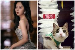'Cẩm Tâm Tựa Ngọc': Chung Hán Lương đăng Weibo vì cảnh phim 18+