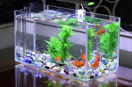 Bể cá là 'khắc tinh' của người mệnh này, tuyệt đối không được đặt trong nhà