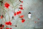 Công chúa nhỏ 3 tuổi 'hóa nàng thơ' trong bộ ảnh bố chụp bên gốc hoa gạo đỏ rực trời Thái Bình