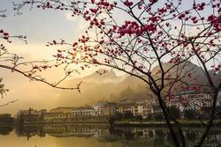 Lên Sa Pa ngắm anh đào Nhật Bản và thung lũng tình yêu tuyệt đẹp
