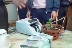 Cây lan 7cm được chuyển nhượng với giá hơn 1,6 tỷ đồng