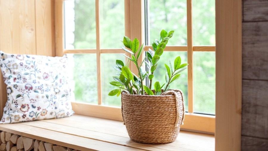 4 loại cây nhà giàu nào cũng thích trồng để mong tài lộc, may mắn-4
