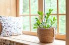 4 loại cây 'nhà giàu' nào cũng thích trồng để mong tài lộc, may mắn