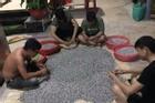 Màn thách đố kiên nhẫn: 4 thanh niên thi xem ai khêu nhiều ốc ruốc nhất