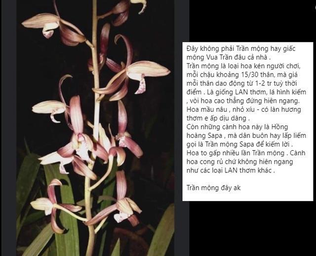 Sự thật về loài hoa lan vua chúa chỉ mấy chục ngàn đồng mua cả ôm-2
