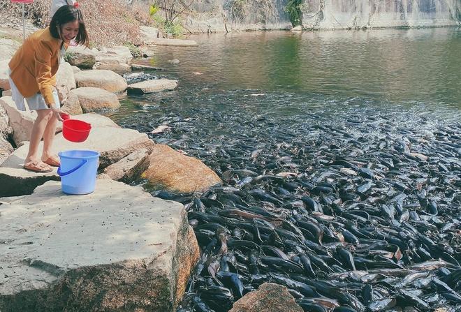 Đàn cá trê hàng nghìn con hút khách du lịch đến Thoại Sơn-1