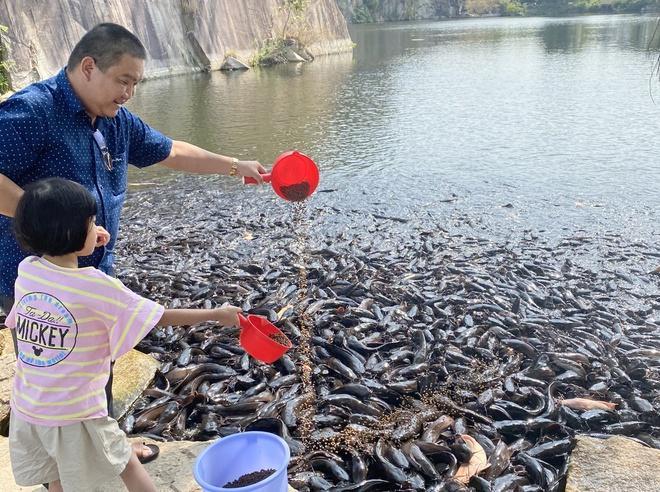 Đàn cá trê hàng nghìn con hút khách du lịch đến Thoại Sơn-2