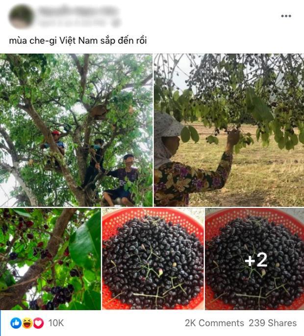 Cô nàng khoe mùa cherry Việt Nam sắp đến, dân mạng cười muốn nội thương-1