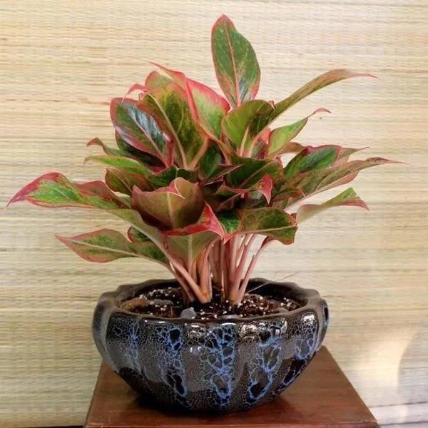 5 loại cây phong thủy đặt lên bàn thờ Thần Tài giúp gia chủ giàu nứt vách-1