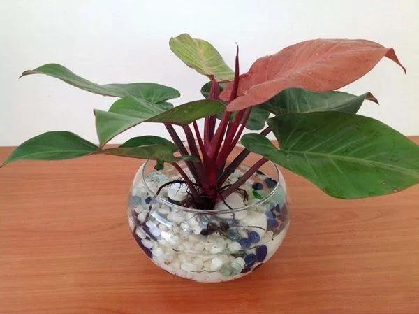 5 loại cây phong thủy đặt lên bàn thờ Thần Tài giúp gia chủ giàu nứt vách-2