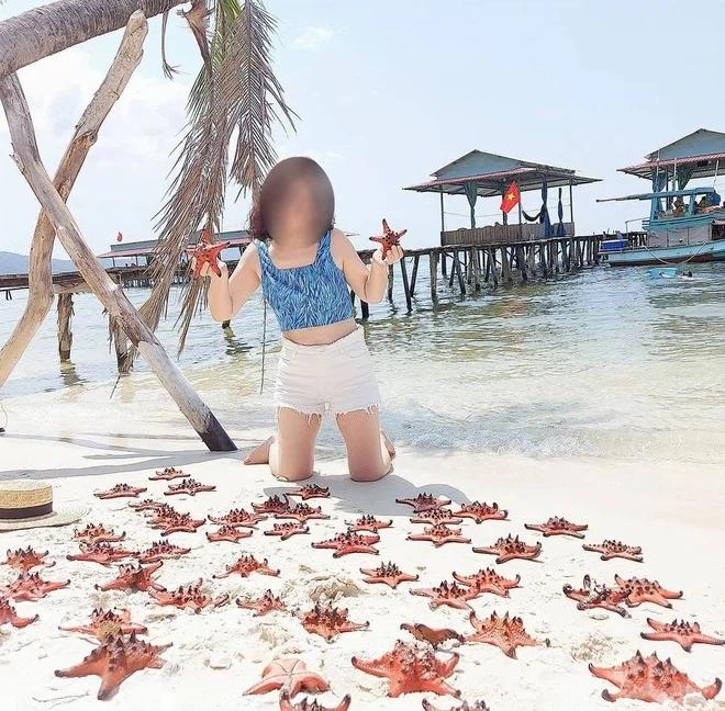 Vì sao du khách chỉ chạm vào sao biển cũng đủ giết chết chúng?-4