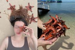 Vì sao du khách chỉ chạm vào sao biển cũng đủ giết chết chúng?