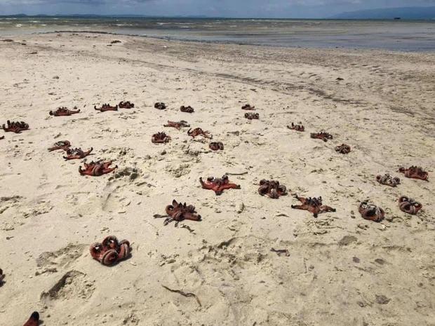 Tóc Tiên nói về trend check-in với sao biển: Hãy là du khách hiểu biết-1