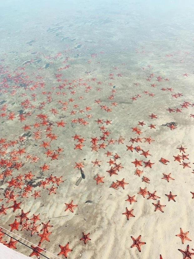 Tóc Tiên nói về trend check-in với sao biển: Hãy là du khách hiểu biết-3