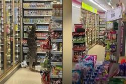 Kỳ đà dài 2m đột nhập cửa hàng tiện lợi ở Thái Lan
