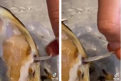 Mua sò về nướng bơ tỏi, cô gái khiếp vía rút ra một con sán dài ngoằng trong ruột sò