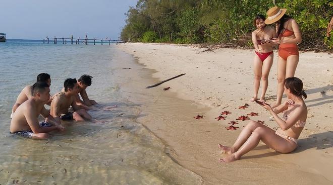Chính quyền lên tiếng vụ sao biển chết khô ở Phú Quốc-1