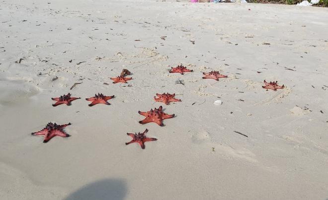 Chính quyền lên tiếng vụ sao biển chết khô ở Phú Quốc-2