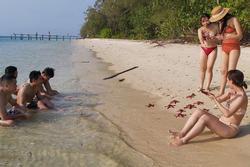 Chính quyền lên tiếng vụ sao biển chết khô ở Phú Quốc