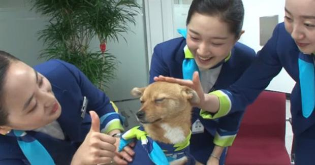 Chú chó mê gái khét tiếng ở sân bay Hàn Quốc-3
