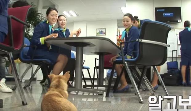 Chú chó mê gái khét tiếng ở sân bay Hàn Quốc-4