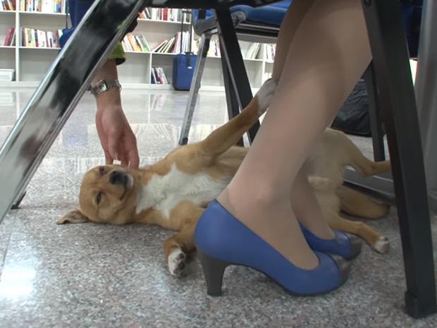 Chú chó mê gái khét tiếng ở sân bay Hàn Quốc-5