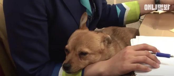 Chú chó mê gái khét tiếng ở sân bay Hàn Quốc-7