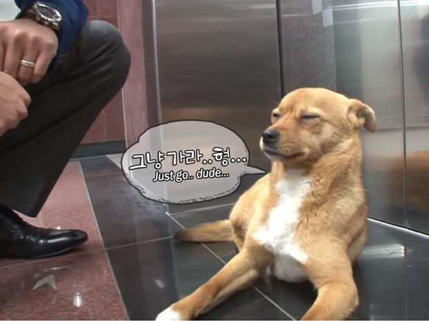 Chú chó mê gái khét tiếng ở sân bay Hàn Quốc-8