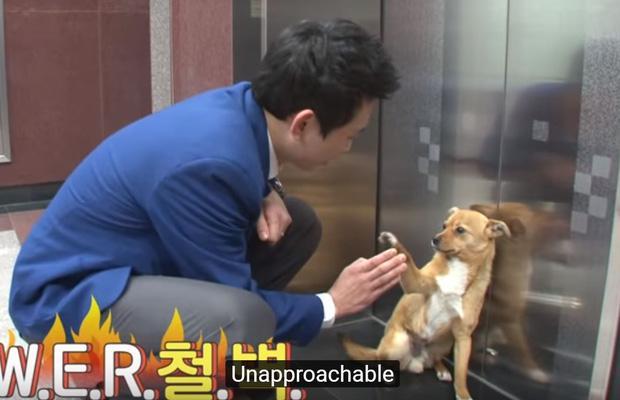 Chú chó mê gái khét tiếng ở sân bay Hàn Quốc-9