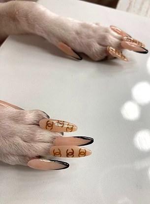 Cô gái bị dọa kiện tội ngược đãi khi làm nail cho chó cưng-2