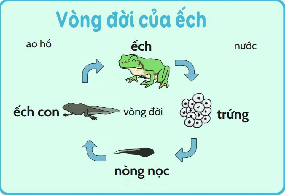 Học RMIT mà sao Chi Pu không biết nòng nọc là con của ếch?-2