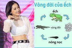 Học RMIT mà sao Chi Pu không biết nòng nọc là con của ếch?