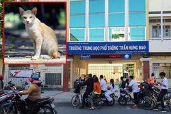 Thầy giáo đập lún sọ người đàn ông đi đường chỉ vì... mất con mèo!