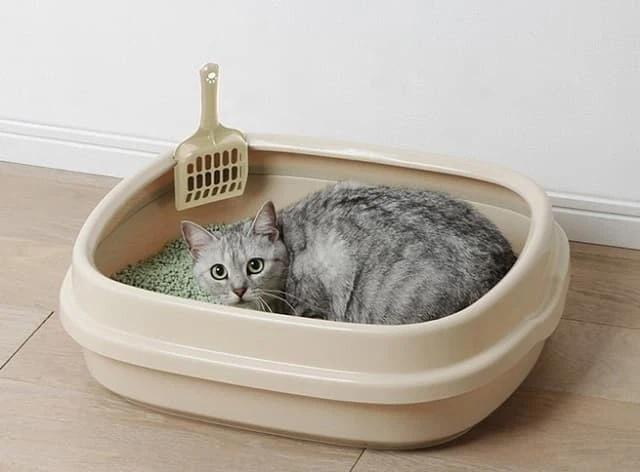 Vì một chậu cát mèo, cô gái thông minh bóc mẽ được sự thật mà bạn trai che giấu-2