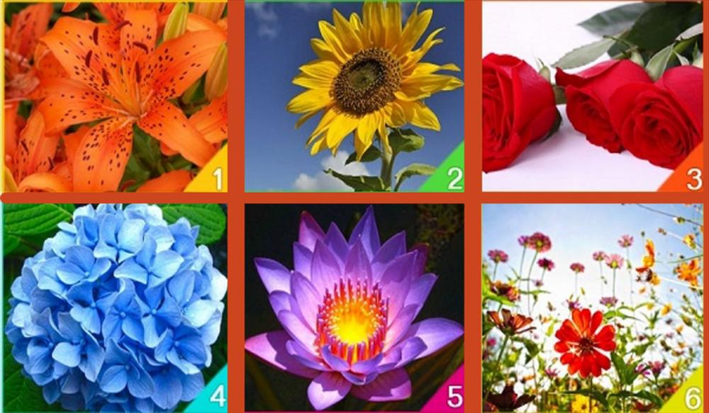 Loài hoa bạn yêu thích tiết lộ năng lượng trong tâm hồn bạn-1