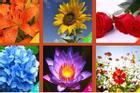 Loài hoa bạn yêu thích tiết lộ năng lượng trong tâm hồn bạn