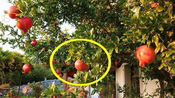3 cây phong thủy trồng trước nhà giúp giàu sang thịnh vượng, phú quý ba đời-1
