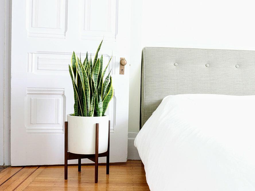 7 loại cây cảnh NÊN đặt trong phòng ngủ vừa tốt cho sức khỏe vừa hợp phong thủy-2