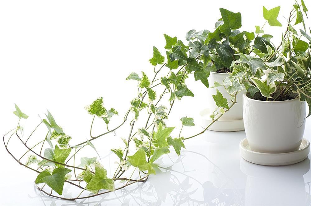 7 loại cây cảnh NÊN đặt trong phòng ngủ vừa tốt cho sức khỏe vừa hợp phong thủy-4