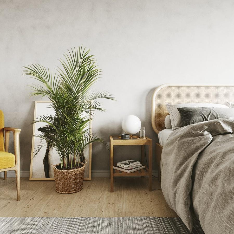 7 loại cây cảnh NÊN đặt trong phòng ngủ vừa tốt cho sức khỏe vừa hợp phong thủy-5