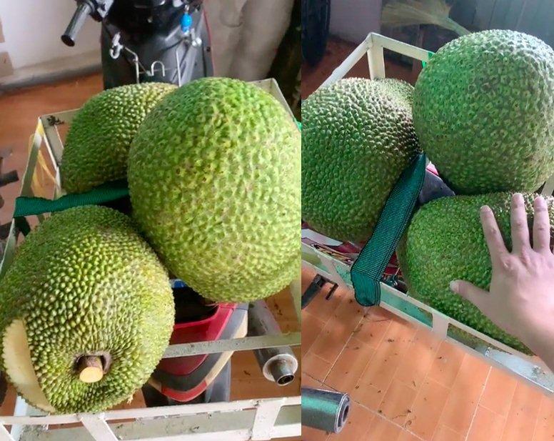 Thu hoạch được 3 trái mít nặng gần 30kg, tới lúc đem bán chàng trai sốc nặng-1